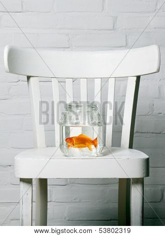 clear tub with goldfish inside