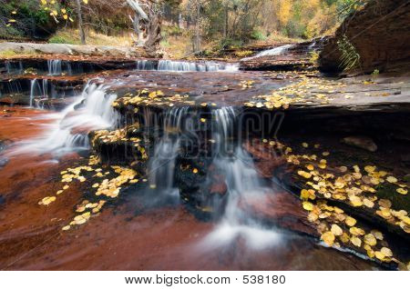 Cascades And Leaf Litter