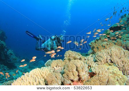 Scuba Diving on coral reef with tropical fish poster