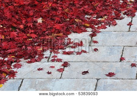 Down Fallen red leaf on the stone pavement poster