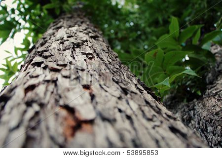 Close up of a tree with a narrow depth of field at cold weather. poster
