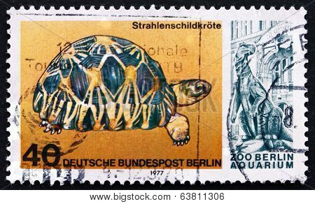 Postage Stamp Germany 1977 Radiated Tortoise, Reptile