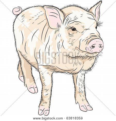 Vector Closeup Portrait Of Funny Piggy