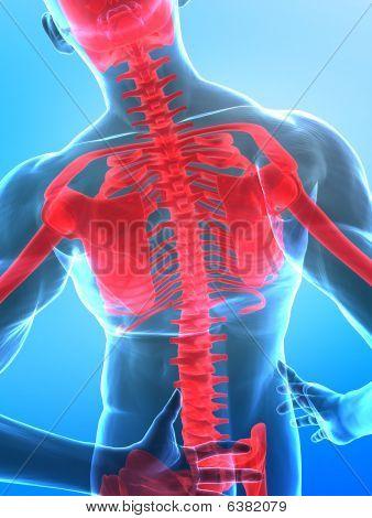 Human X-ray Spine