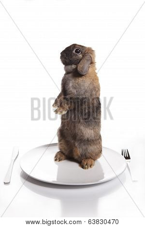 Brown Rabbit On The Plate