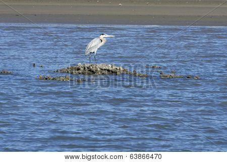 Blue Heron On Sandbar