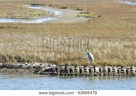 Blue Heron in Aransas Pass