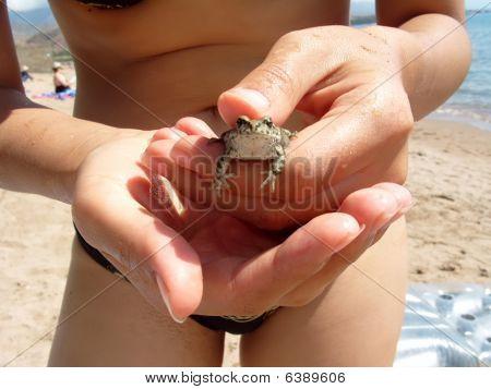 Frog in the hands