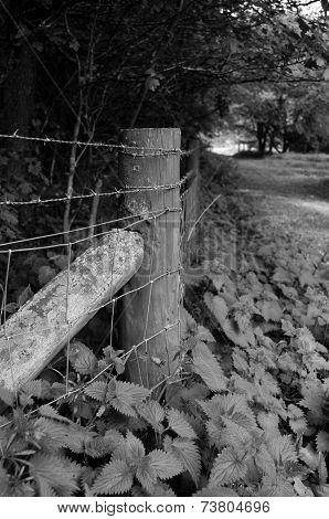 Valla de madera junto al camino