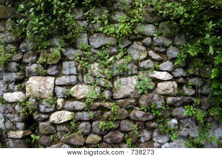 Crumbling Wall at Ninfa