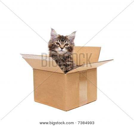 small kitten in box against white background poster