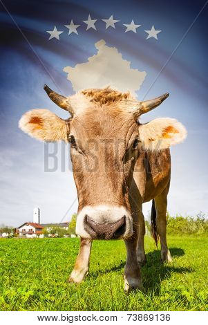 Cow with flag on background series - Kosovo poster