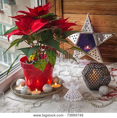 Christmas Star  (euphorbia Pulcherrima) On The Window