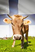 Cow with flag on background series - Finland poster