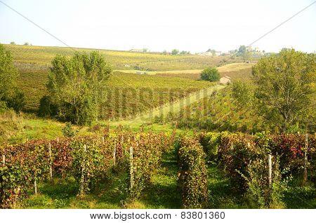 Harvest in October Oltrepo Pavese italy barbera poster
