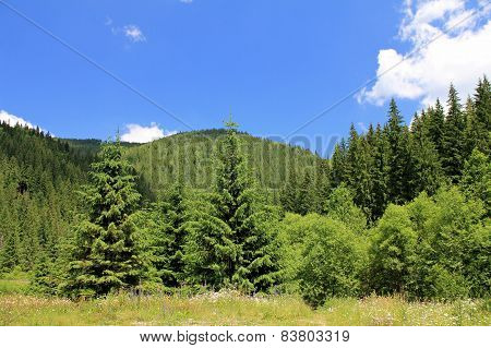 Forrest on the hills