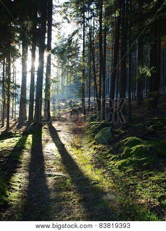 view of the forest landscape., South Bohemia, Czech Republik