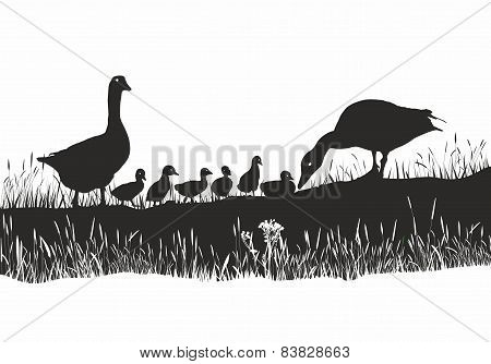 Geese Family On Spring Meadow