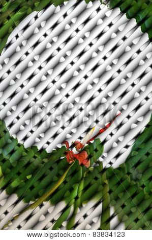 Anthurium On Lattice Abstract