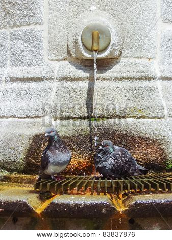 Two Pigeons On Water Fountain