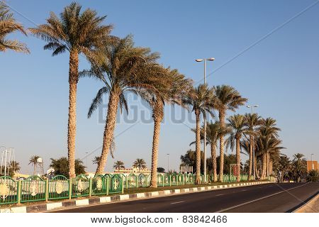 Palm Trees Alley In Town Mezairaa