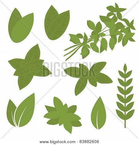 isolated herb leaf, plant