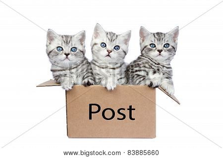 Three young cats in cardboard box with word Post