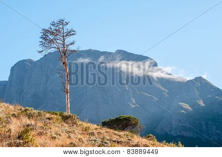 Dead Pine Tree Against Mountain