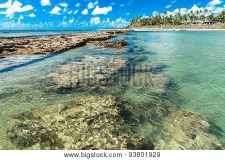 The Great Reef Barrier in Porto de Galinhas, Brazil