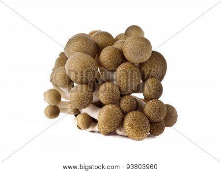 Shimeji Mushroom, Brown Beech Mushroom On White Background