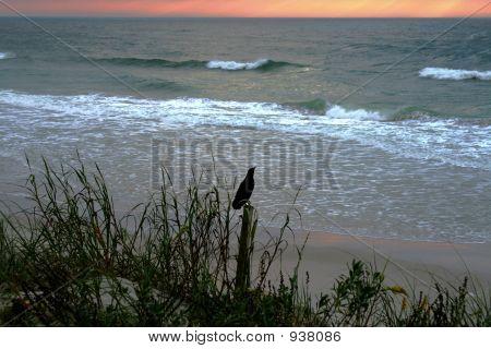 Morning Songbird At The Beach