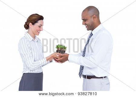 Business colleagues holding plant together on white background