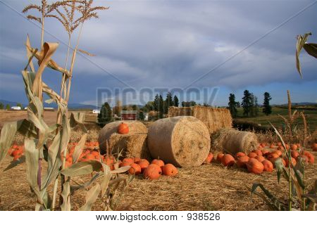 Pumpkin And Hay Harvest Scene