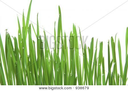 Green Grass, Horizontal Format