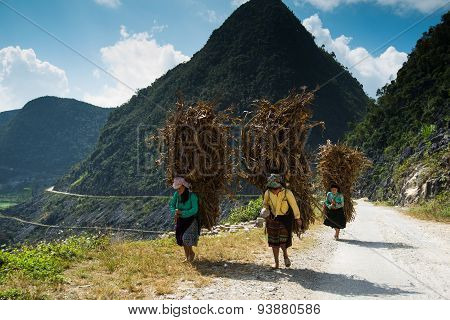 Unidentified H'mong ethnic minority woman carry dry trees