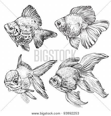 set of Goldfish. Vector illustration isolated on white