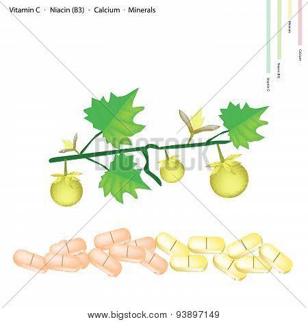 Solanum Stramonifolium Fruits With Vitamin C, B3 And Calcium