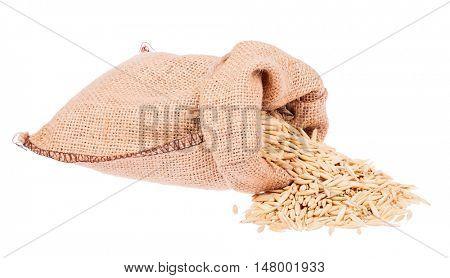 oat in burlap sack isolated on white background