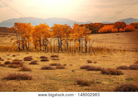 Colorful scenic view in Autumn season with yellow trees in clear day.