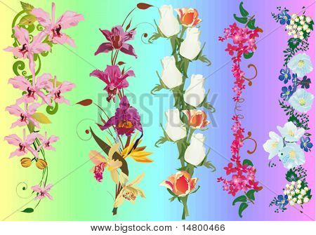 illustration with flower strips collection
