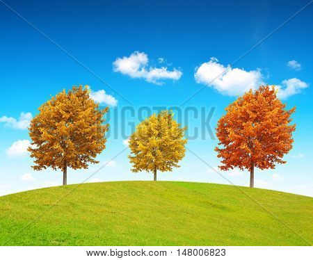 Autumn landscape with colorful trees in sunny day.