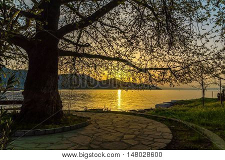 Amazing Sunset on embankment and tree in Thassos town, East Macedonia and Thrace, Greece