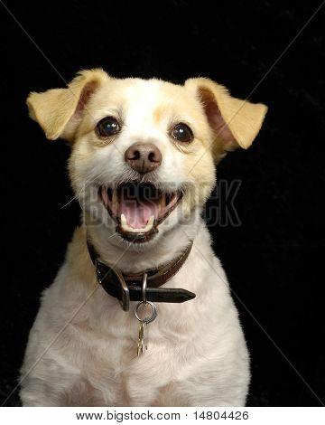 Ein Porträt von niedlich, lächelnd, junger Hund