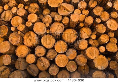 Image of stacked logpile & wood texture