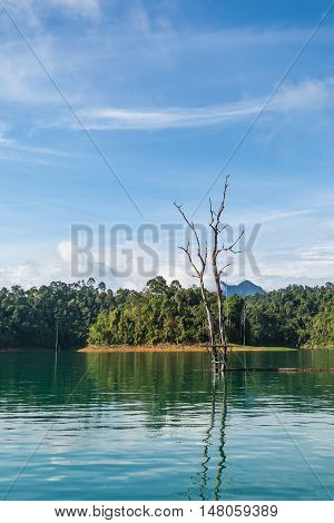 Dead tree in water with beauriful view of Ratchaprapha dam Surat Thani Thailand.
