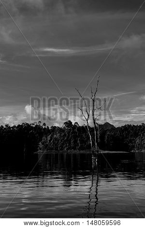 Black and white dead tree in water in Ratchaprapha dam Surat Thani Thailand.
