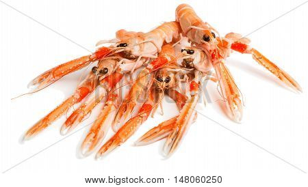 Some uncooked langoustines isolated on white background. Nephrops L.
