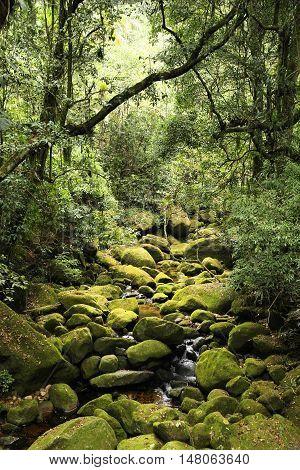 Jungle In Brazil
