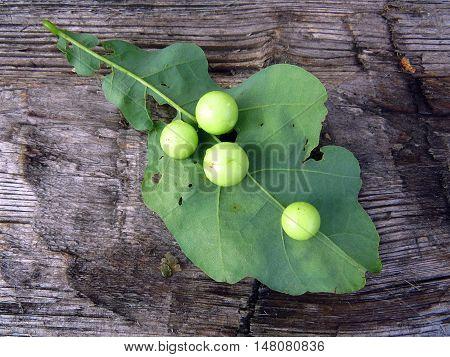 Oak Leaf. Oak leaf on a wooden surface. Fallen oak leaf.