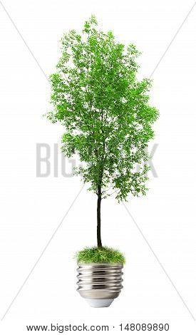 Green Ash Tree As Lamp Bulp